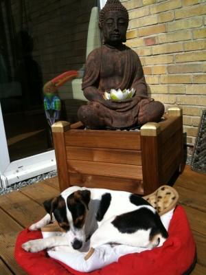 Die Vollkommenheit des Geistes - buddhaFoto
