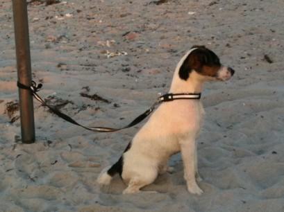 Hundstage - amstrandFoto