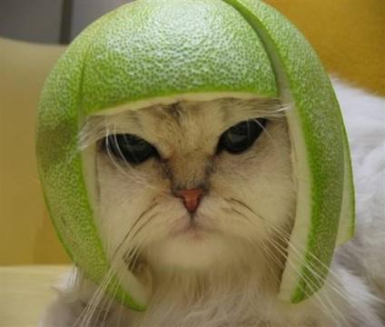 was mache ich wenn ich....... - citroncat